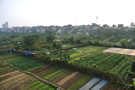 farm plots in Vietnam