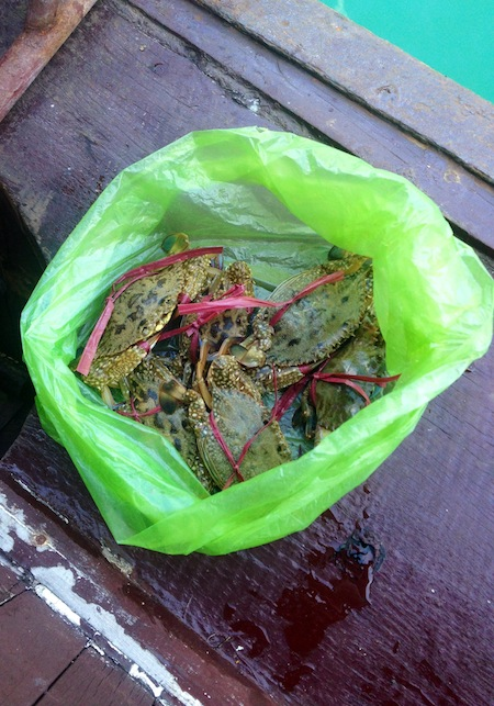 Crabs we had for dinner during our Halong Bay cruise.